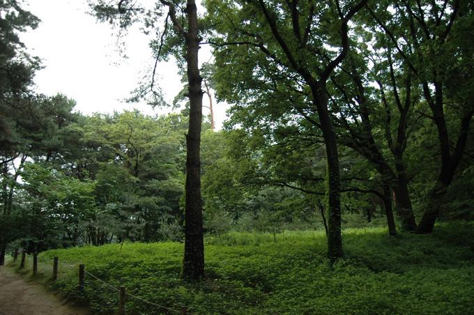 산책로로 손색이 없는 잘 가꿔진 숲입니다.