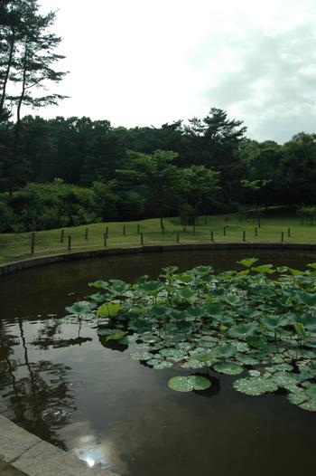 연못 안에는 연꽃이 무성합니다.