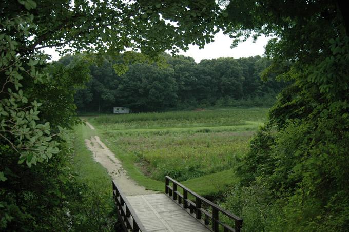 융릉과 건릉 사이의 산책로 중앙에는 공터가 있는데, 묘목이 심겨져 있네요. 어디에 쓰려는 거지?