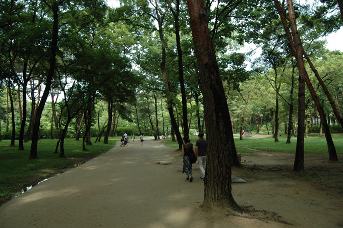 소나무숲 사이로 나 있는 통로. 소나무 숲의 잔디밭엔 누구나 와서 자리 깔고 쉴 수 있습니다.