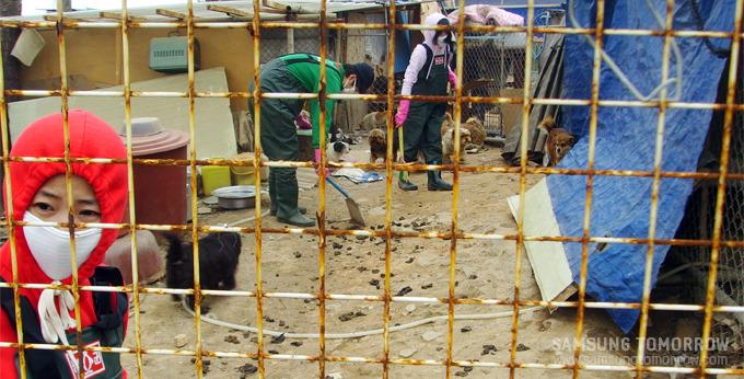 바닥에 가득한 강아지들의 배설물