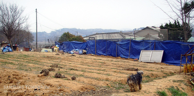 천사원이라는 사설 유기견 보호시설의 모습