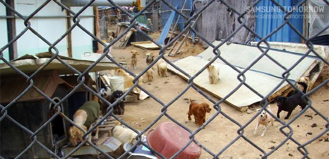 중앙 견사, 모여있는 강아지들