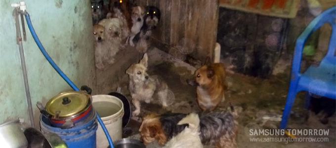 내부견사에 모여있는 강아지들