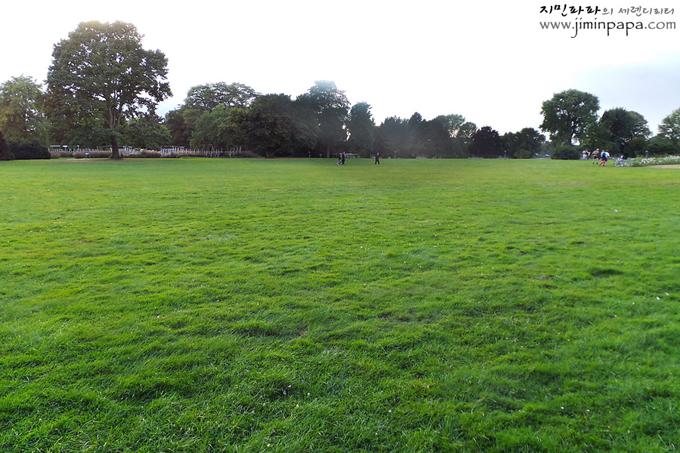 천연 녹색모드로 찍은 잔디
