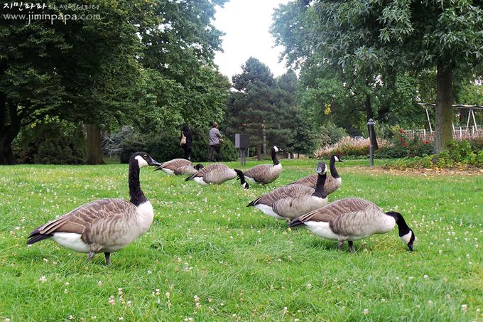 천연 녹색모드로 찍은 잔디위의 새들