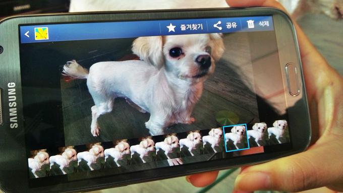 강아지사진 연속촬영한 화면