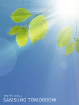 나뭇잎과 햇살 이미지입니다.