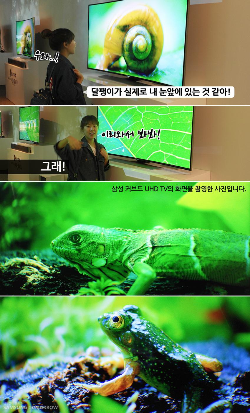삼성 커브드 uhd tv의 화면을 촬영한 사진입니다. 달팽이가 실제로 내 눈앞에 있는 것 같아! 이리와서 봐봐! 그래! 삼성 커브드 UHD TV 화면을 촬영한 사진입니다.