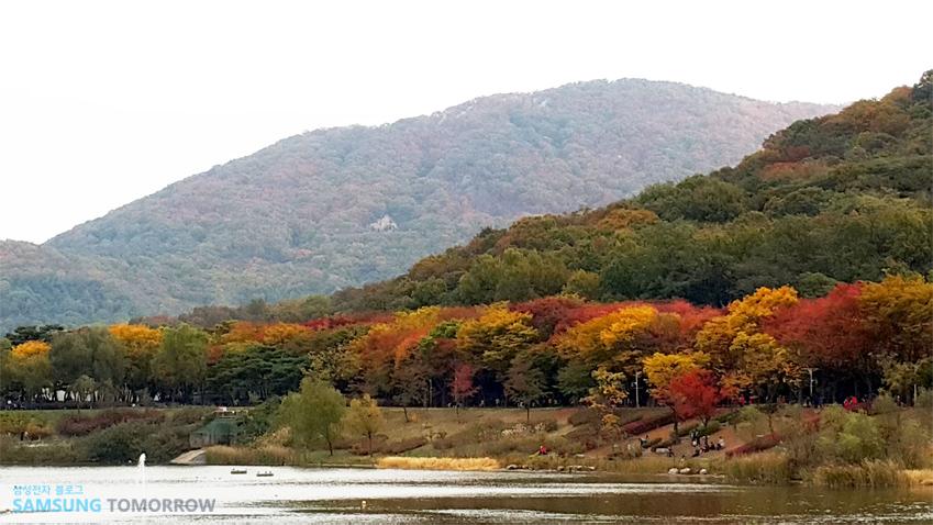 단풍이 물들고 있는 산입니다.
