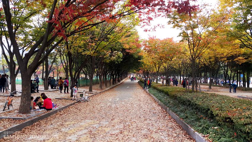 낙엽이 떨어진 거리의 모습입니다.
