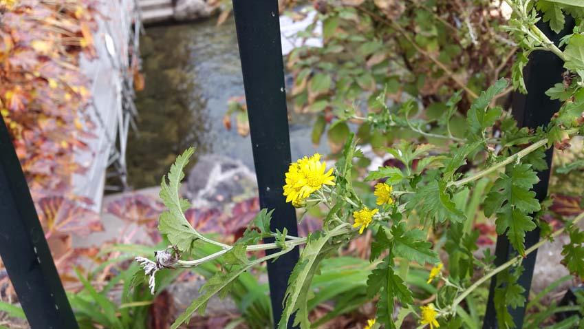갤럭시 알파로 꽃을 찍은 사진입니다.