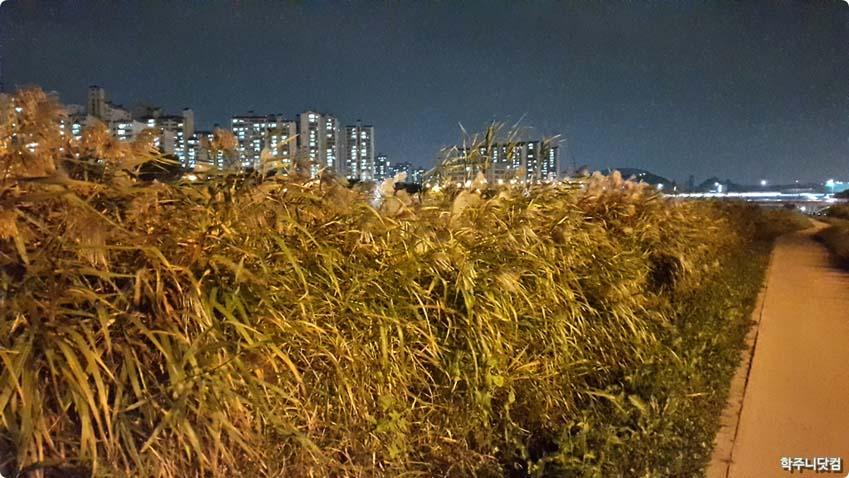 밤의 억새숲
