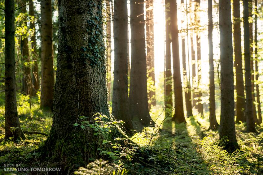 나무 숲 사진