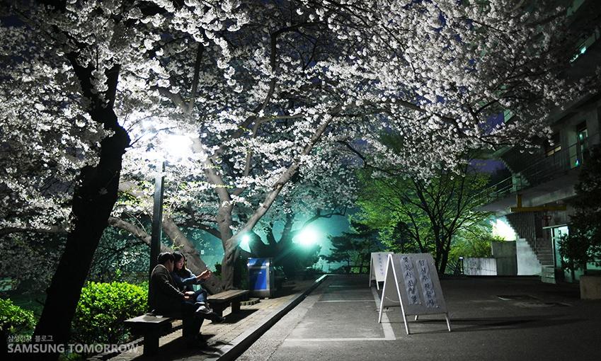 감도 단위인 ISO값을 높여 찍었더니 밤 사진도 선명하게 나왔다. 사진은 동국대학교 우체국 옆 벚나무
