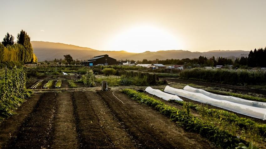 크리스토퍼 코스토우가 운영하는 더레스토랑앳메도우드는 미국 최대 와인 산지 중 한 곳인 나파밸리를 보여주고 있다