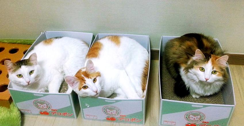 이세미 사원이 키우고 있는 고양이들. (왼쪽부터)수리∙유키∙두부