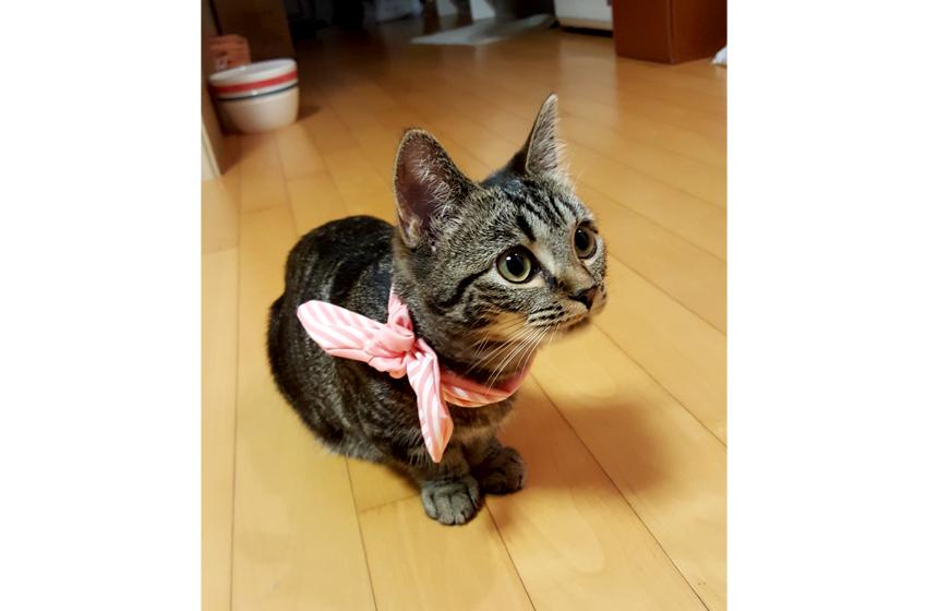 분홍색 스카프를 하고 있는 고양이 마리