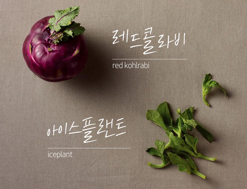 레드 콜라비 red kohlrabi, 아이스플랜트 iceplant