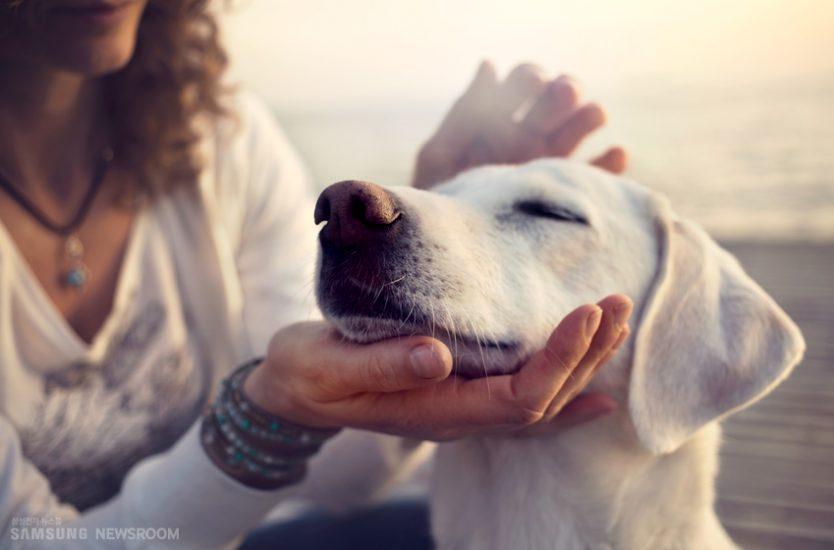 강아지를 만지는 여자의 모습