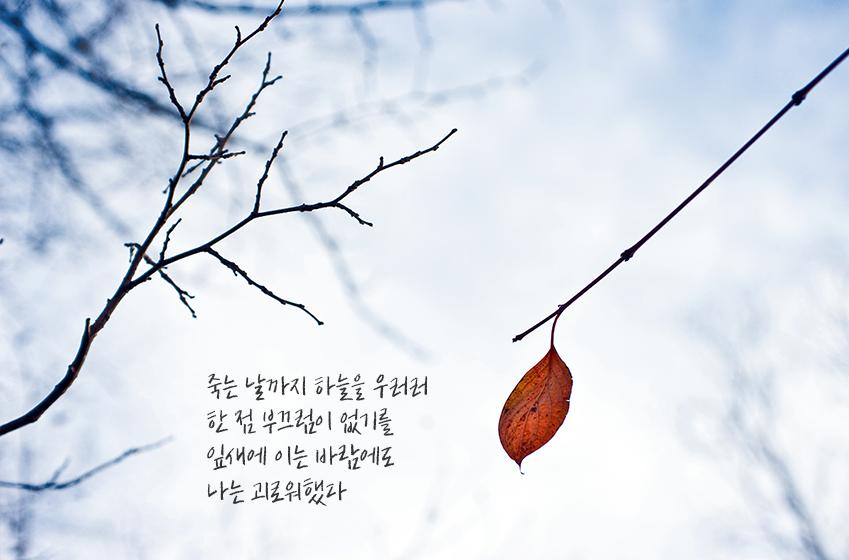 죽는 날까지 하늘을 우러러 한 점 부끄럼 없기를 잎새에 이는 바람에도 나는 괴로워했다