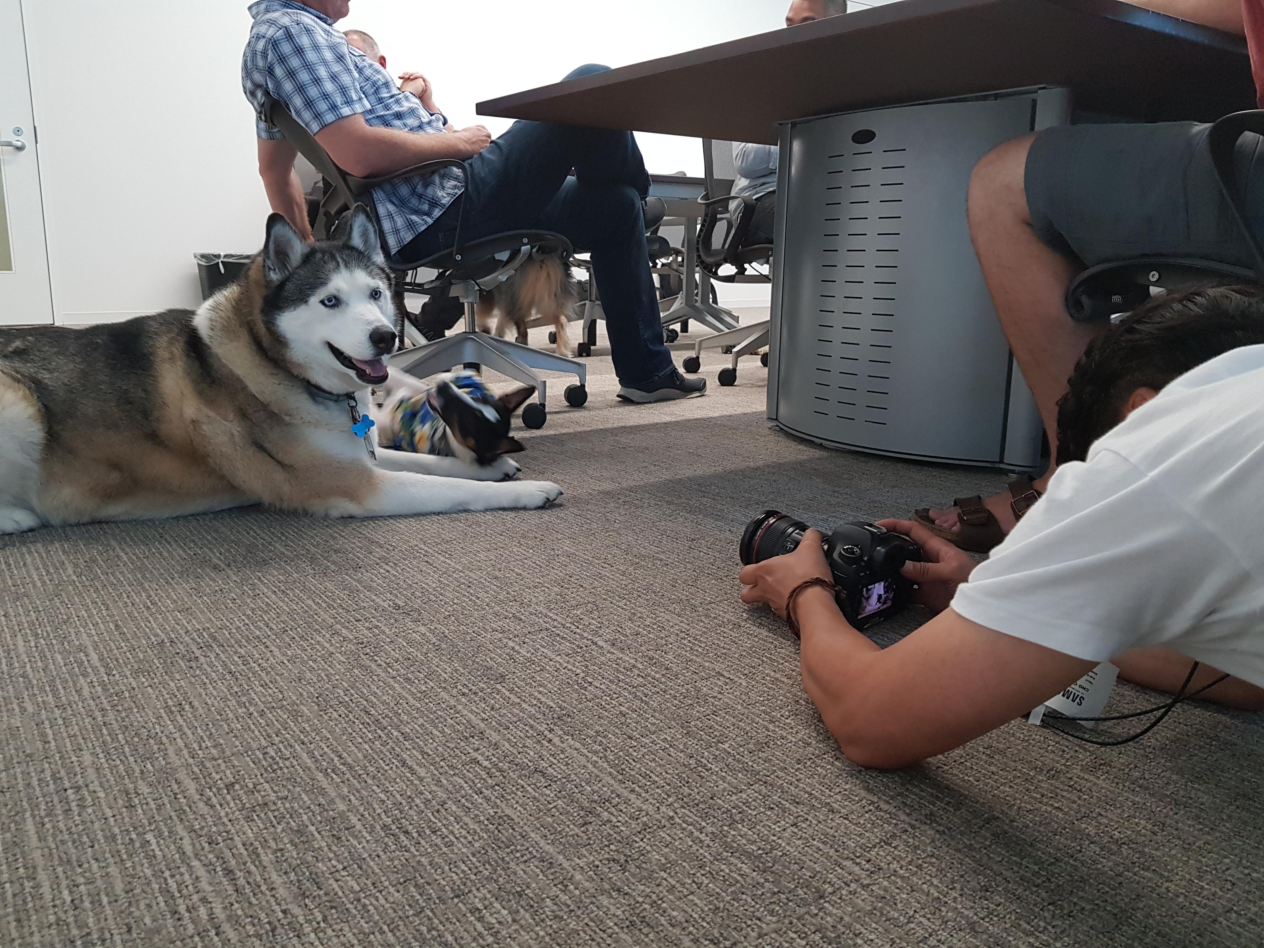 사무실 안에 앉아 있는 개 촬영 중