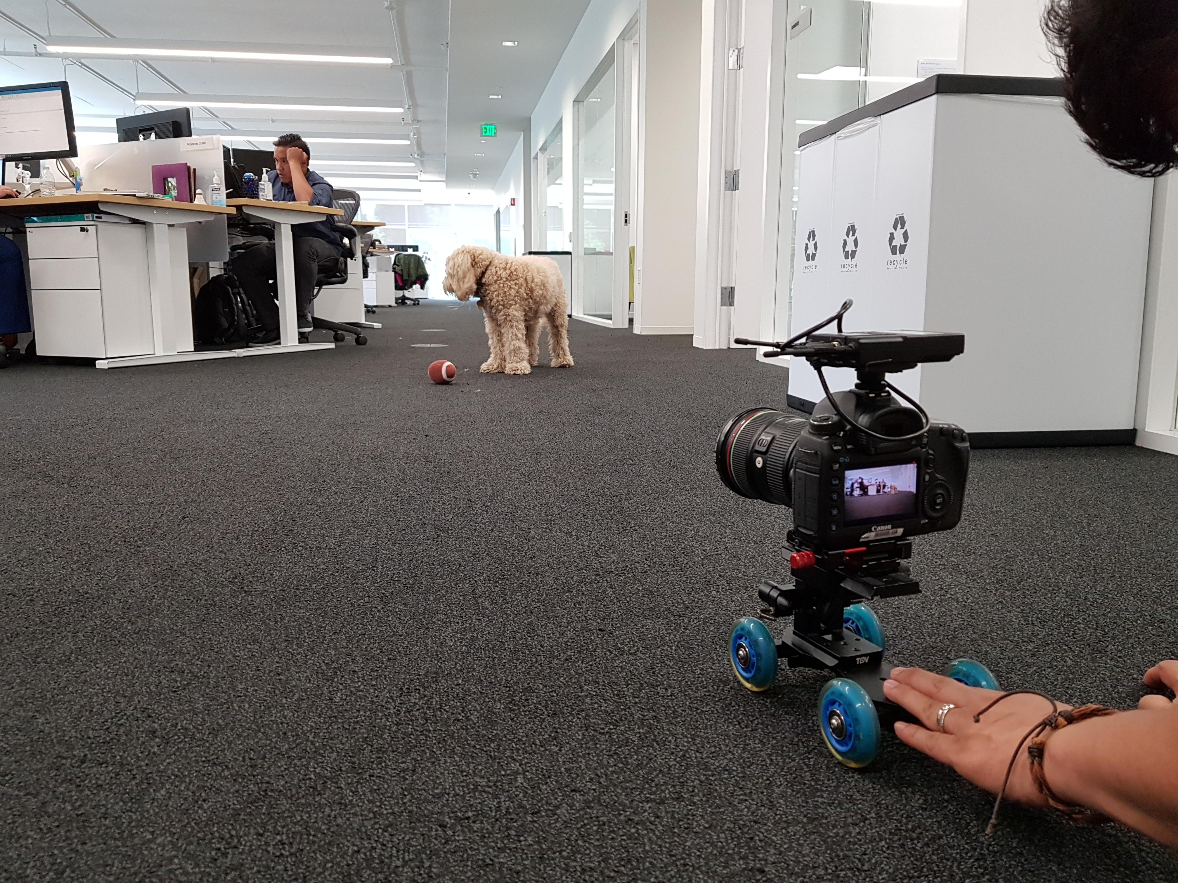 강아지 촬영 중 1
