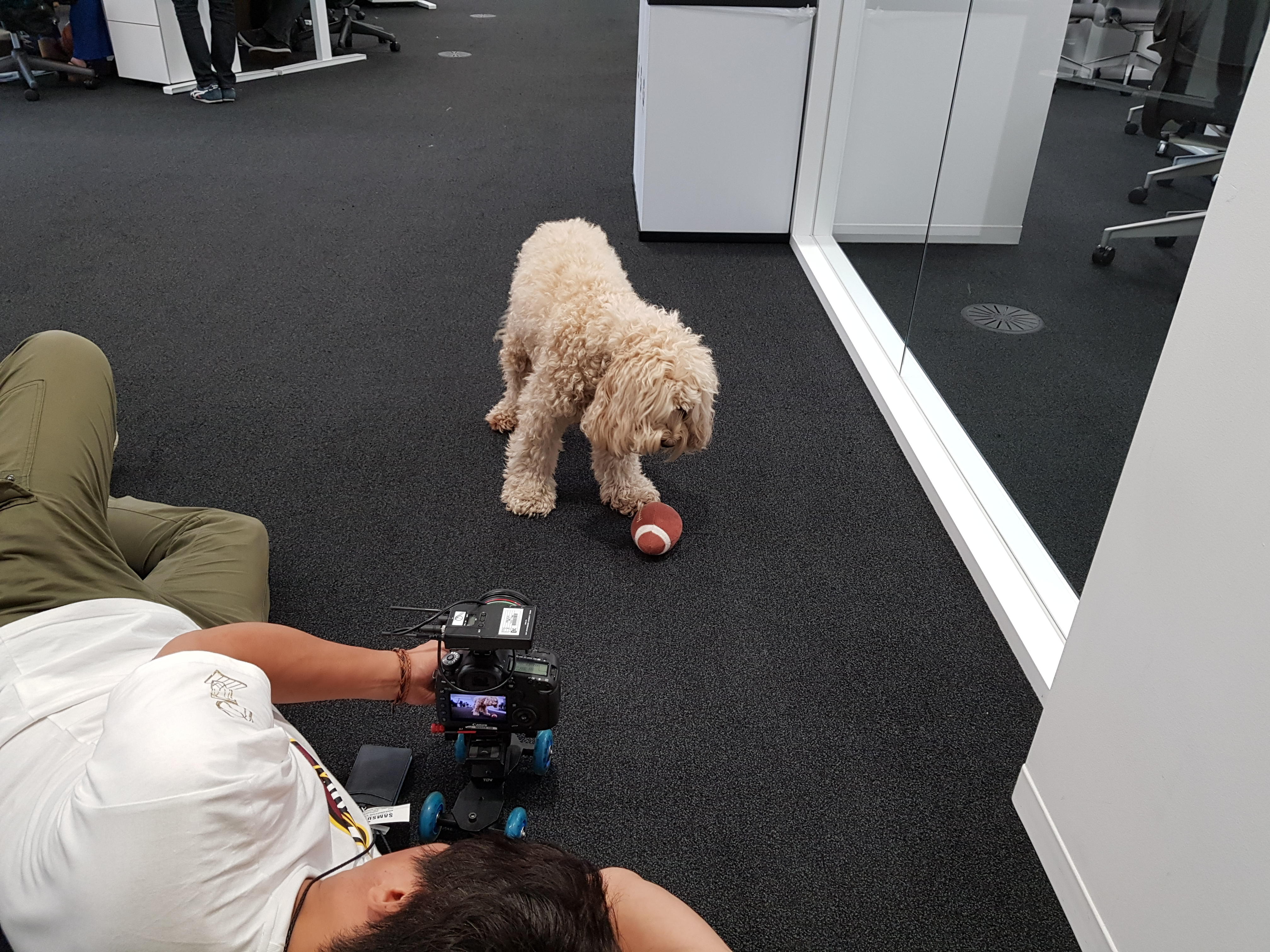 개를 촬영중인 스텝