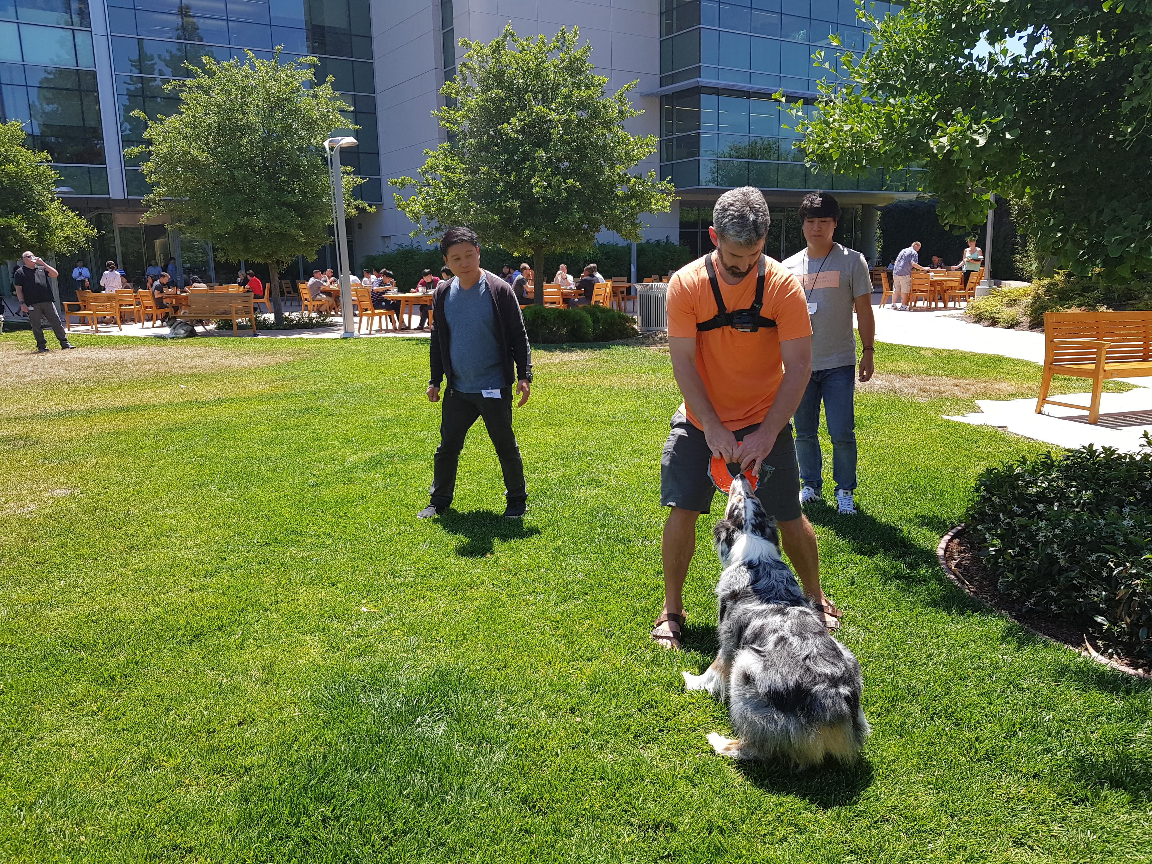 잔디밭에서 개와 놀아주고 있는 견주
