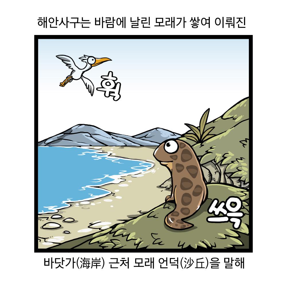 해안사구는 바람에 날린 모래가 쌓여 이뤄진 바닷가 근처 모래 언덕을 말해