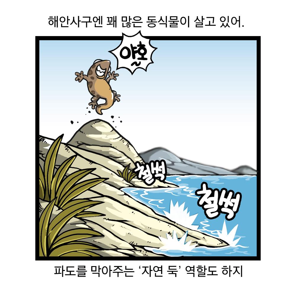 해안사구엔 꽤 많은 동식물이 살고 있어, 파도를 막아주는 자연 둑 역할도 하지 야호~