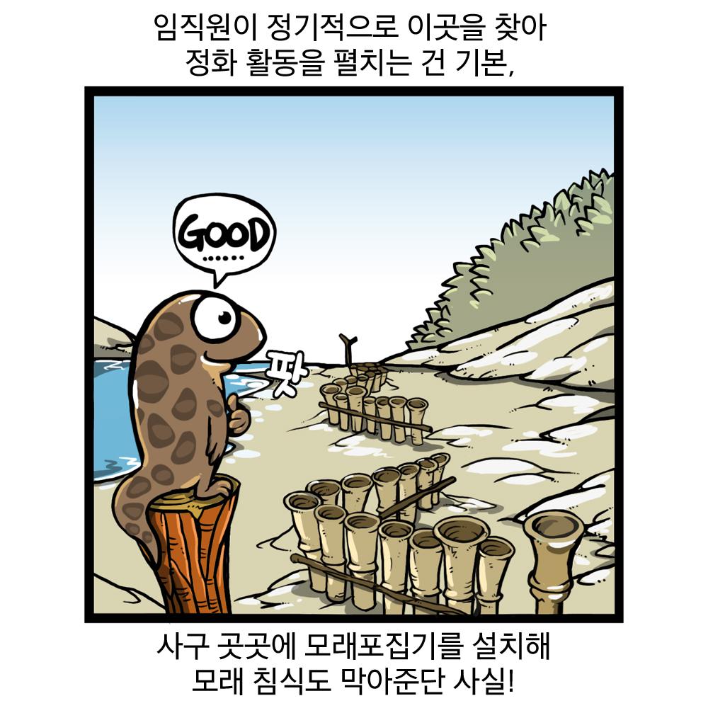 임직원이 정기적으로 이곳을 찾아 정화활동을 펼치는 건 기본, 사구 곳곳에 모래포집기를 설치해 모래 침식도 막아준단 사실!