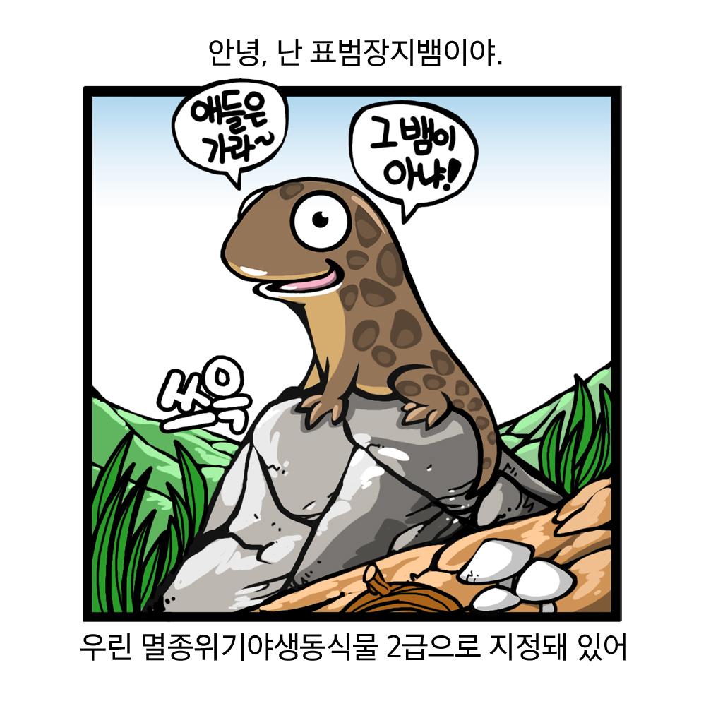 안녕, 나는 표범장지뱀이야. 애들은 가라~ 그뱀이 아냐! 우린 멸종위기야생동식물 2급으로 지정돼 있어