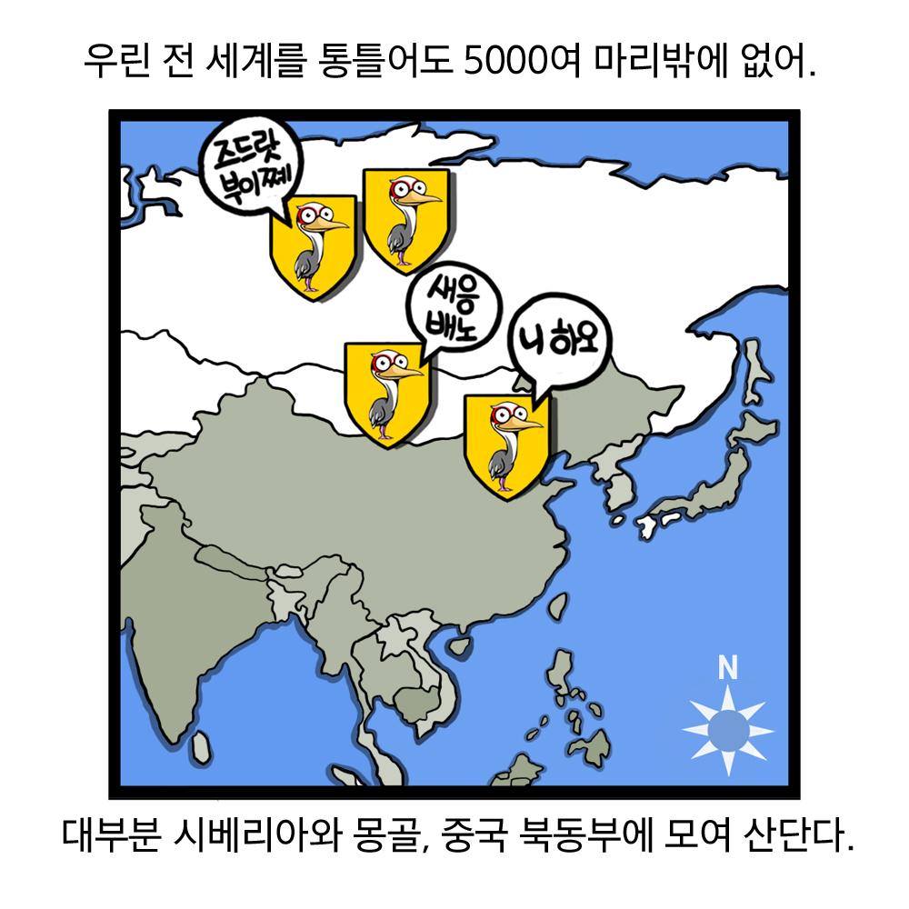 우린 전 세계를 통틀어도 5000여 마리밖에 없어. 대부분 시베리아와 몽골, 중국 북동부에 모여 산단다. 즈드랏부이쩨, 새응배노, 니하오