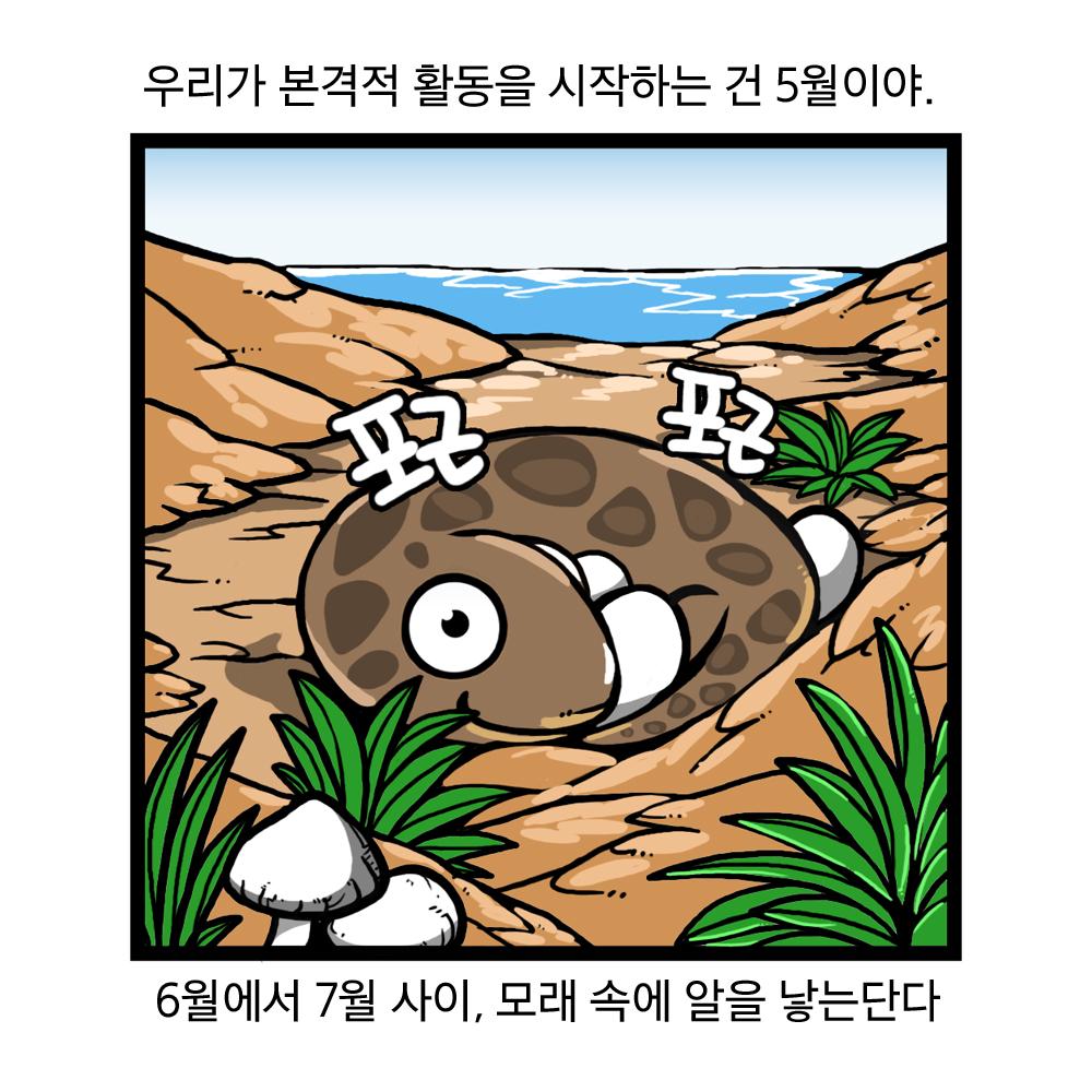 우리가 본격적 활동을 시작하는 건 5월이야, 6월에서 7월 사이, 모래속에 알을 낳는단다