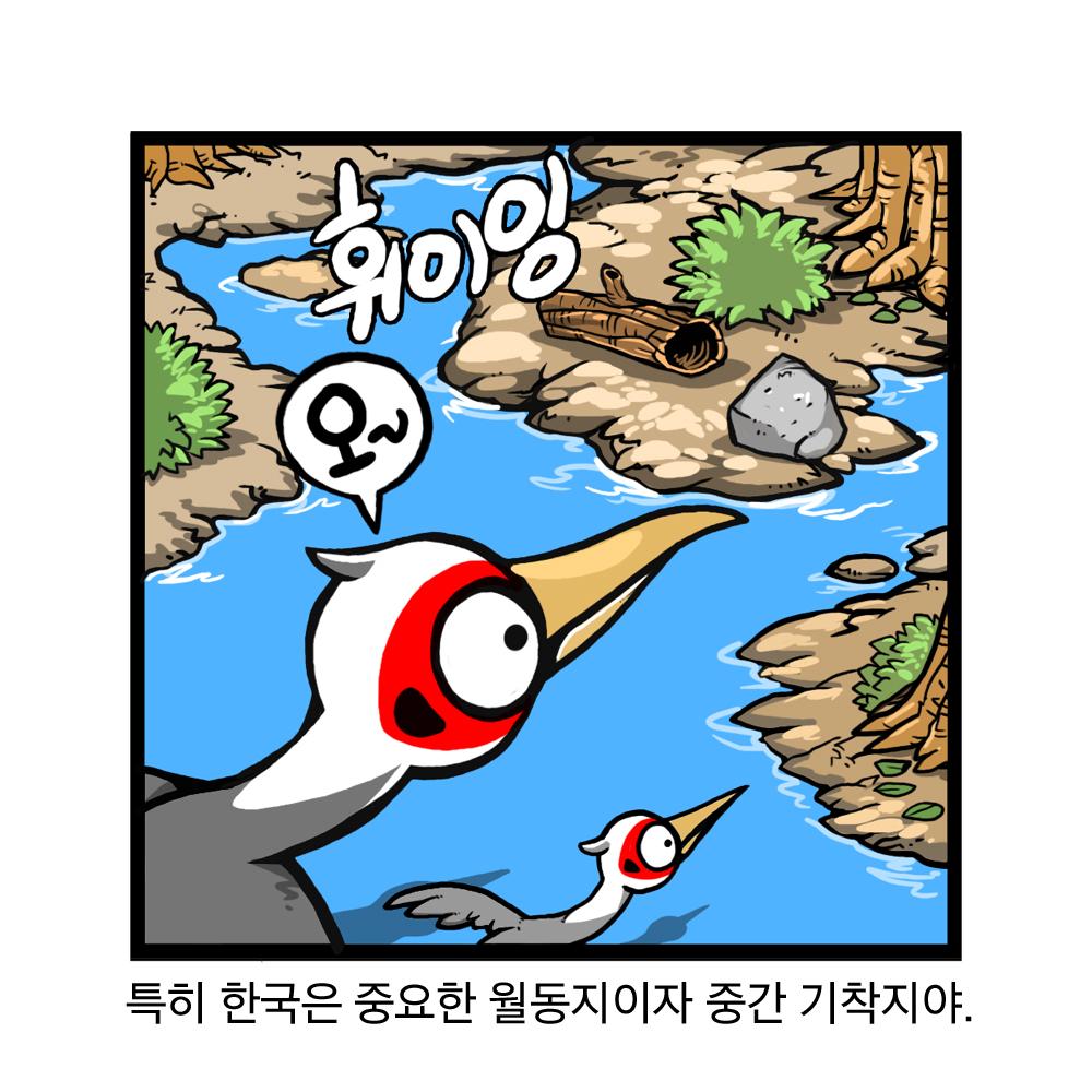 특히 한국은 중요한 월동지이자 중간 기착지야. 휘이잉 오~