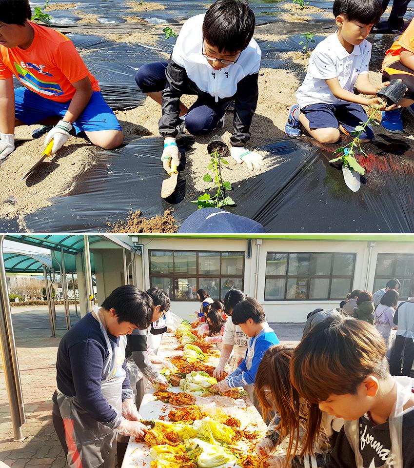 ▲ 아이들은 매년 계절에 맞춰 텃밭에서 농식물을 기르고, 수확한 작물로 직접 김치를 담근다