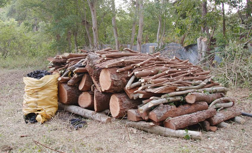 ▲나무 한 그루로 숯을 만들 때 실제로 활용되는 건 10%에 불과하다. 나무 1톤당 숯 두 자루(100㎏) 꼴이다