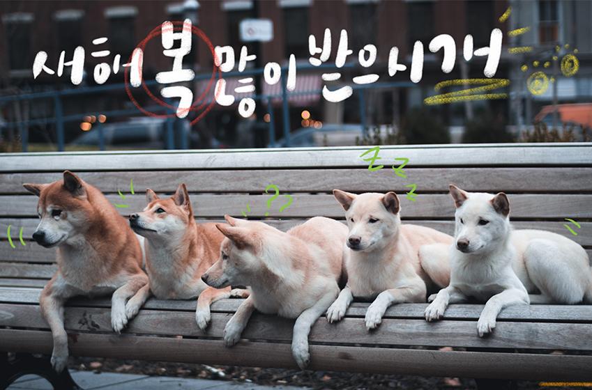 캘리그라피 / 새해 복 많이 받으시개