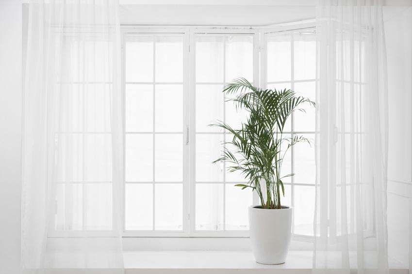 공기정화식물을 키워보세요