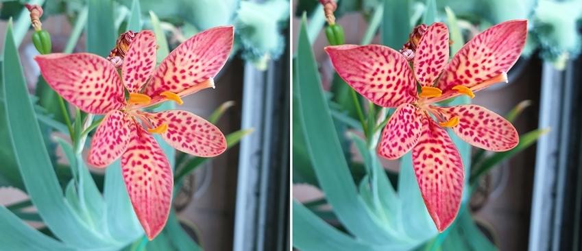 인텔리전트 카메라 모드로 촬영한 꽃