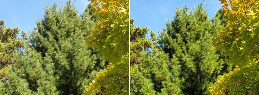인텔리전트 카메라로 촬영한 나무