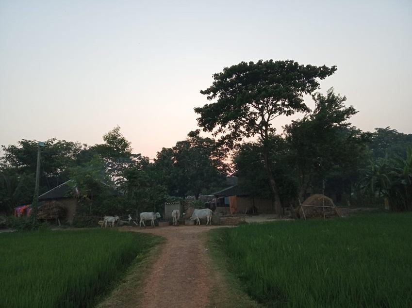▲아프로자가 나고 자란 마다브디히마을 풍경. 주민 대부분이 농업에 종사하는 현실을 보여주듯 논 사이로 농가와 가축들이 눈에 띕니다