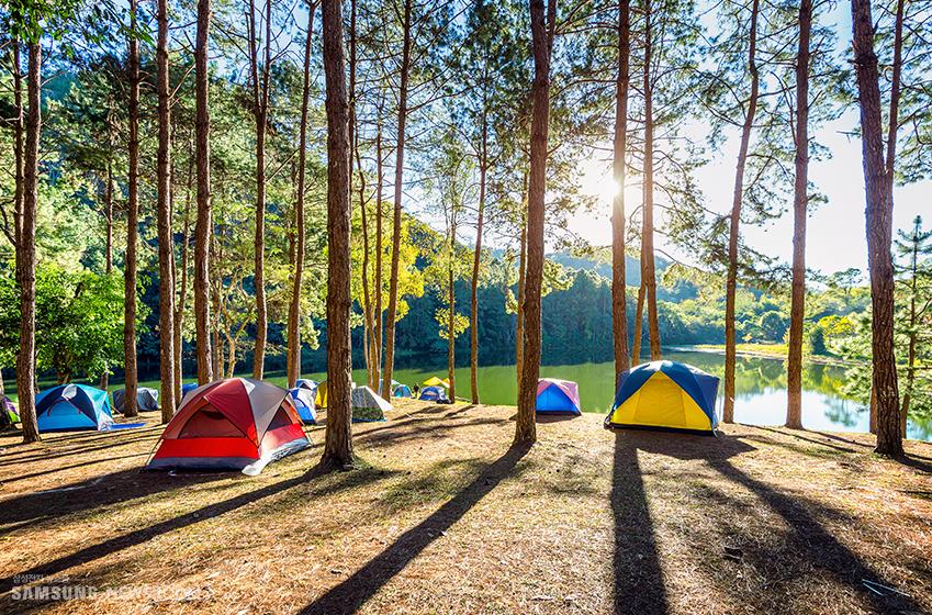 숲 속에 있는 여러 채의 텐트들