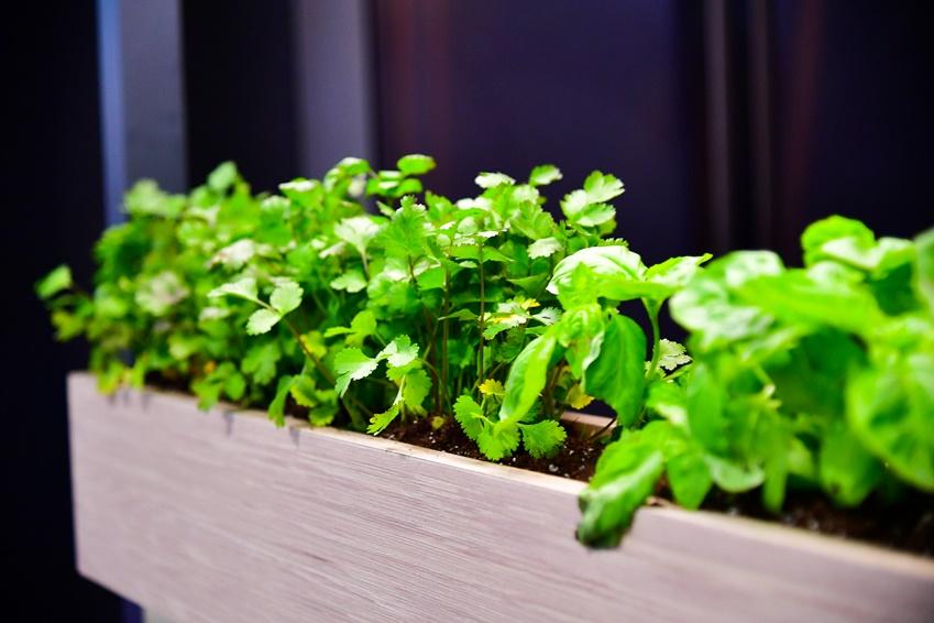 ▲ 녹색 식물은 공간에 생동감을 준다. 녹색 식물로 공간을 꾸미는 '플랜테리어(플랜트(plant)와 인테리어(interior)의 합성어)'로 다소 무게감이 느껴지는 블랙 톤의 주방에 활기를 더한다.