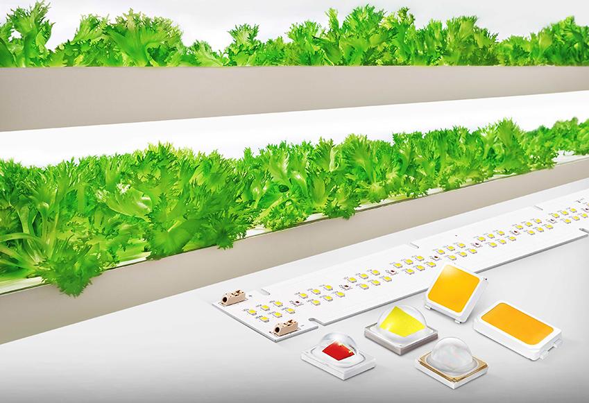 ▲ 삼성전자 식물 생장용 LED 패키지와 모듈