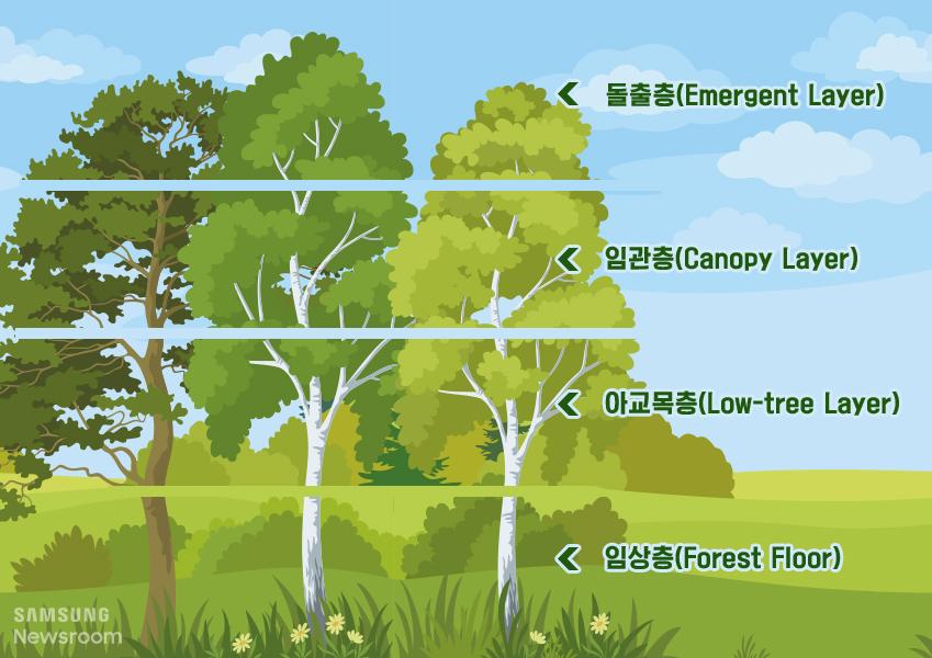 > 돌출층(Emergent Layer)  > 임관층(Canopy Layer)  > 아교목층(Low-tree layer)  > 임상층(Forest Floor)