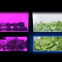 [건강한 먹거리, 기술과 만나다] ② 삼성, 건강한 먹거리를 고민하다