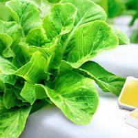 삼성전자, 식물 생장용 백색 LED 업계 최고 효율 달성