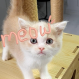 """[영상] """"집사, 나 예쁘게 나오냥?""""…갤럭시 노트10+로 담은 아기 고양이"""